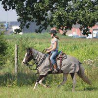 paardenkamp voor jou