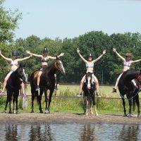 Paardenkamp praktisch