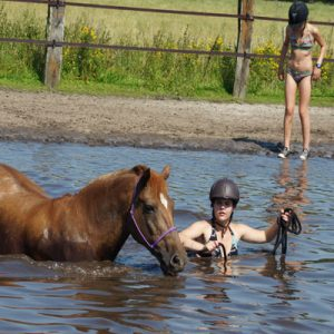 paardenkamp water